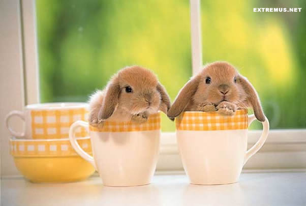 bunnies cute cute bunnies